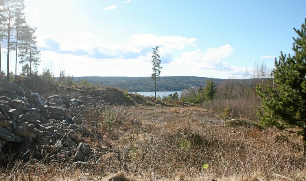 VAKKERT: Mye av skogen på Bålerud og i områdene rundt skal nå bli til boligområder.