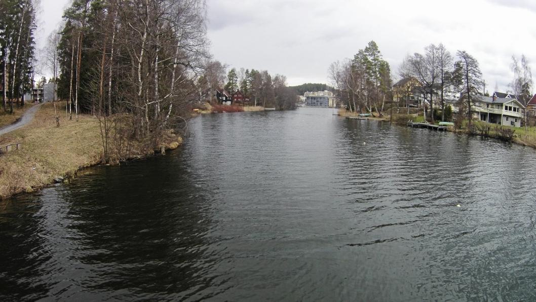 FULL AV ALGER: Kommunens siste vannprøver viser en kraftig oppblomstring av blågrønnalger i Kolbotnvannet.