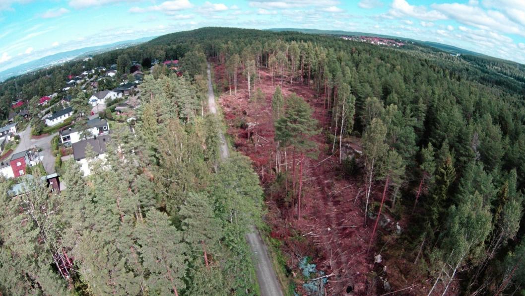 MYE SOM ER HUGGET: Sett fra fugleperspektiv, ser man at det er gjort et ganske stort innhogg i skogen, men på sikt skal det bli fint!