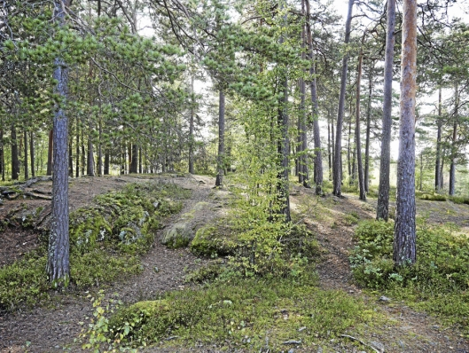 GRØNN LUNGE: Den kommunale skogseiendommen på Rikeåsen er på mer enn 140.000 kvadratmeter, og utgjør et viktig område for lek og friluftsliv i nærmiljøet. Foto: Yana Stubberudlien.