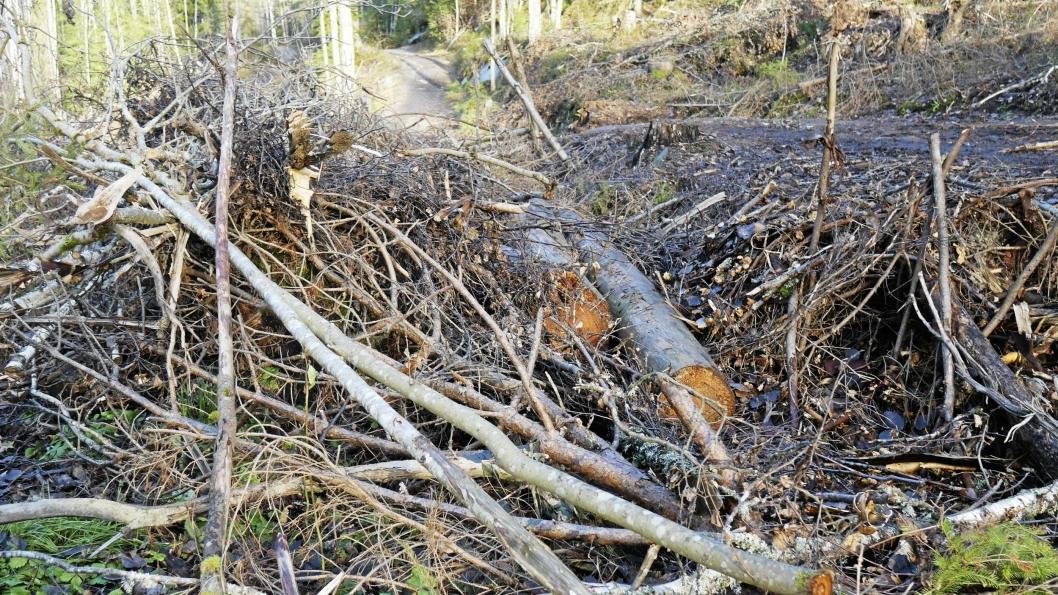 – OPPEGÅRD HAR ANSVAR: Oppegård kommune har ansvar for oppryddingen, ifølge Bymiljøetaten.