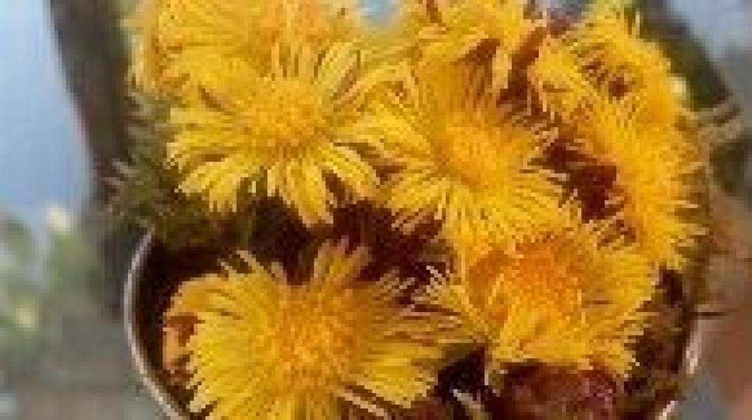 SÅ FINE: Årets første blomster er plukket på Solbråtan!