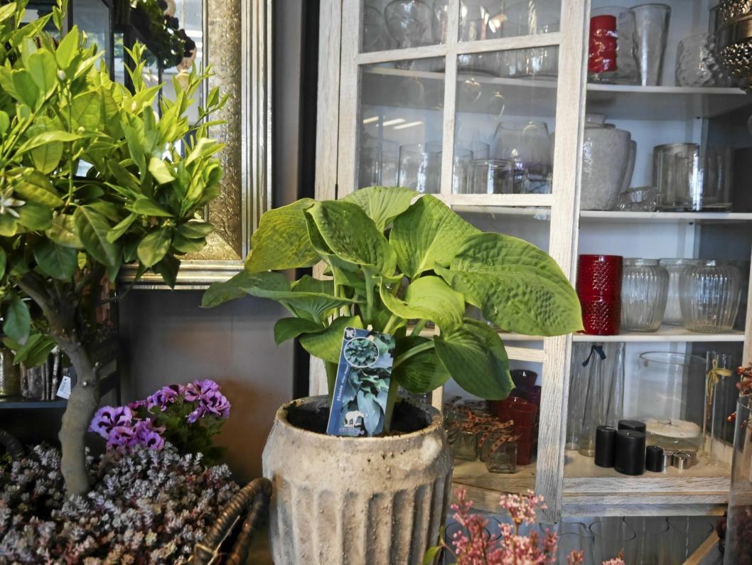 KRUKKER: Terracotta-trenden er i vinden for tiden, gjerne med grønne planter.
