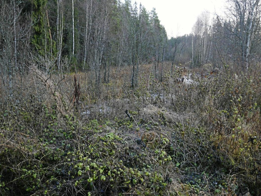 SALAMANDERDAMMEN: Den søndre delen av våtmarken på Trelasttomta skal renskes og opparbeides til en stor dam på 2500 kvadratmeter.