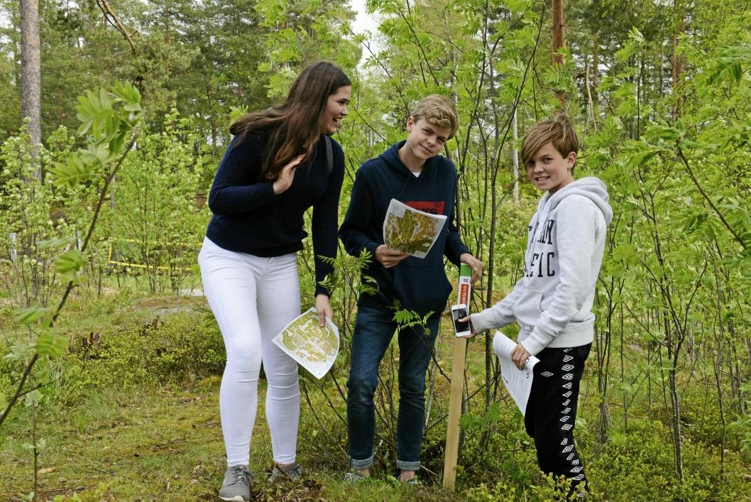 SPENNENDE: 8. klasse elevene fra Hellerasten, (f.v) Erica Drakopoulos (14), Henrik Marstrander (13) og Henrik Ness (13), synes det virker moro med stolpejakta.