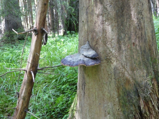 FLOTT: På Svartskog kan du se så mangt i de eventyrlige skogene i området.