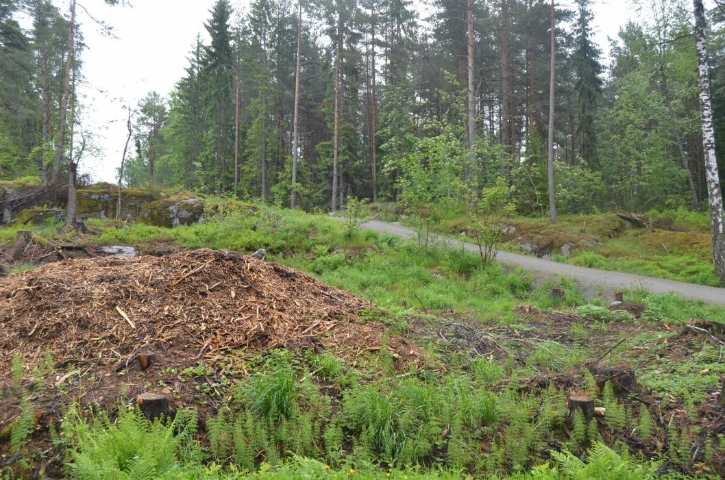 FREDELIG: Her ser du fra gangveien ved Ødegården mot Åsland og Kloppa. Denne stien fører deg til mange flotte steder.