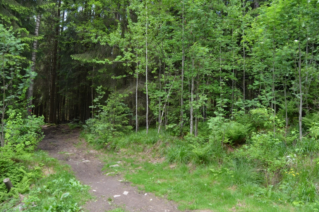 VÆRAVHENGIG: Dette er en bra sti mot lysløypa fra grusveien mot Åsland, men en er ikke sykkelferdig når det har regnet.