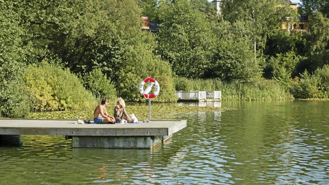 HOLD DEG PÅ LAND: Algemengden i Kolbotnvannet er stor for tiden, og det tilrådes ikke å bade verken for deg eller for din firbente venn.