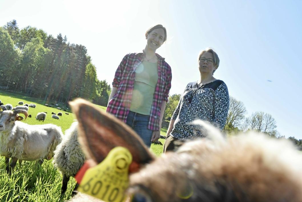 SAUEBØNDER: Kristin og Hilde Hammer Aukrust driver Gården på Svartskog. Her har de sauer, kyr, og griser, i tillegg til kalkuner, hunder og en katt.