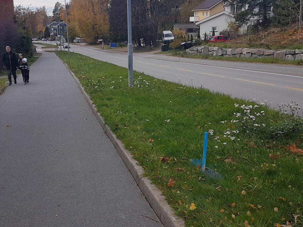 INGEN STORE TILTAK: Har du gått langs Sønsterudveien og lagt merke til at det foregår utsetting av trepinner som markeres med blå spray?