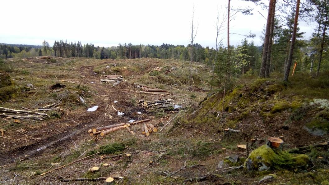 VARIG RASERING: Bildet viser deler av Skogsåsen, med varig rasering av et vakkert turområde. Turstien gikk like foran fotografen.