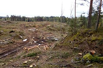 Redd skogen – fra politikerne!