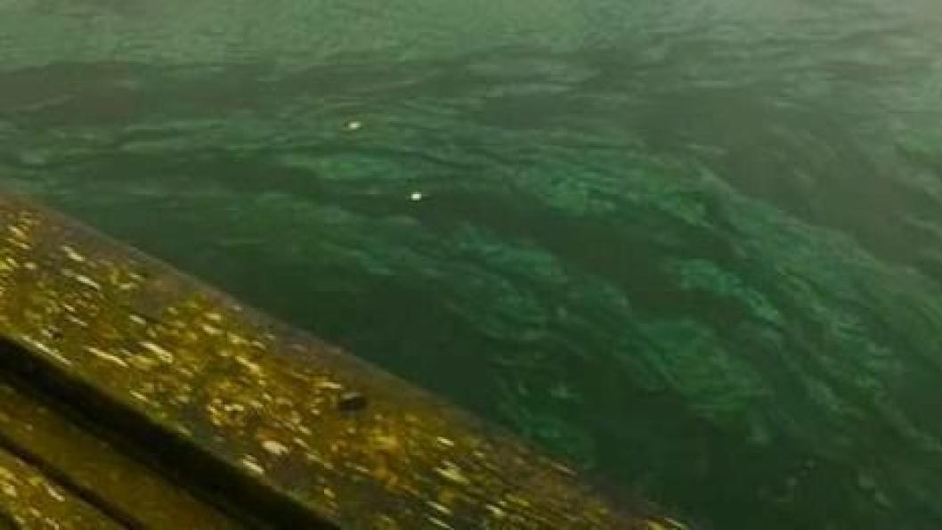 OPPSIKTSVEKKENDE: Bildet ble tatt ved bryggen i Veslebukta lørdag 10. november.