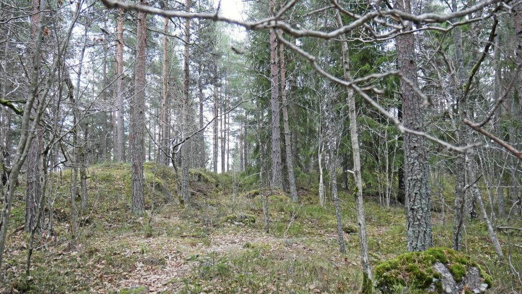 BLIR VERNET: Trolldalen blir vernet som naturreservat.