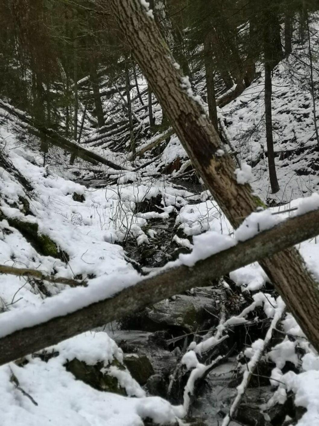 VAKRE TROLLDALEN: De nøyaktige grensene for naturreservatet skal avmerkes i marka.