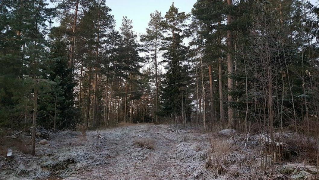 FRA SKOG TIL BOLIGER: Den kommunale eiendommen i Lokes vei 5 på Sofiemyr skal detaljreguleres til boligformål før videre salgsprosess.
