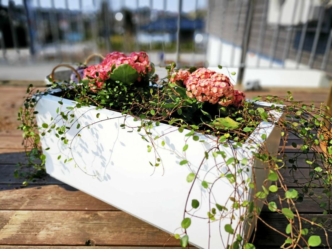 SPRITER OPP: Blomsterkasser finnes i mange farger og fasonger.