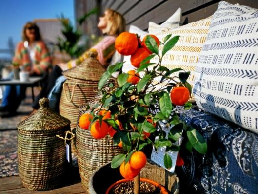 FARGERIKT: Hva med et lite appelsintre i hagen?
