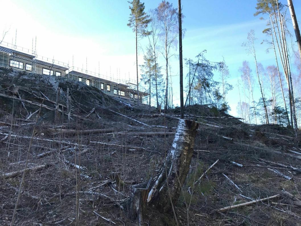 SKOGSÅSEN: Nye boliger spiser trær, sett fra Lille Kolbotnvann.