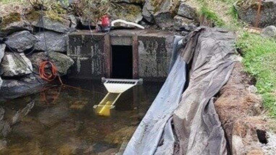 VIKTIG REGISTRERING: Fisketelleren er nå plassert ved oppgangssaga i Gjersjøelva Natur- og kulturpark. Foto: Tom Rune Fløgstad