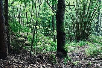 Hvorfor må Eventyrskogen på Svartskog ofres?