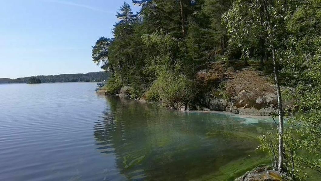 ADVARER MOT BADING: – Siden vi ikke vet hva slags type cyanobakterier det er snakk om, må vi inntil videre advare publikum mot å bade der konsentrasjonen av alger er stor, sier kommunikasjonsrådgiver Robert Fekjær.