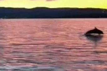 Delfinmoro i Oppegård