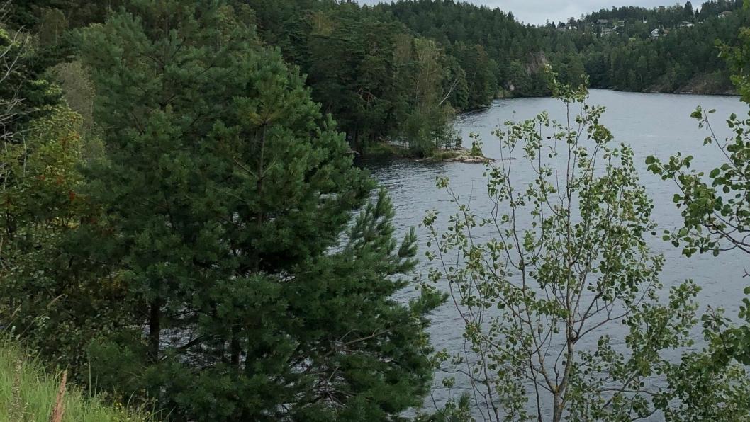 OMTRENTLIG LOKASJON: Bildet viser omtrentlig lokasjon til bilvraket oppdaget i Gjersjøen.