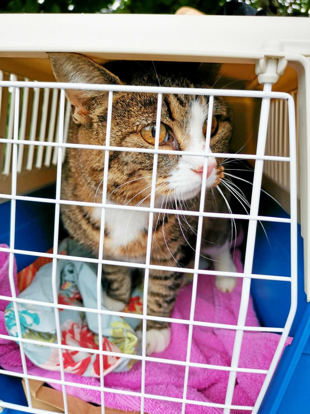 PÅ VEI: Lucia ble litt fortumlet da hun ble plassert i buret og båret ut i bilen.