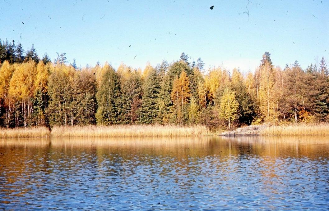 BADEVANN I 1971: Bildet er fra badeplassen Fiskeren som ble brukt til bading hele sommeren.