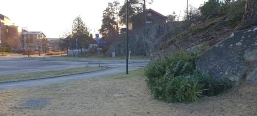 Gratis levering av juletrær