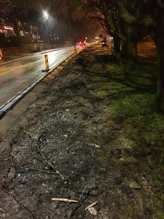SKADET: Flere av trærne i den ensidige alleen i Sønsterudveien har blitt skadet av anleggsmaskinene.