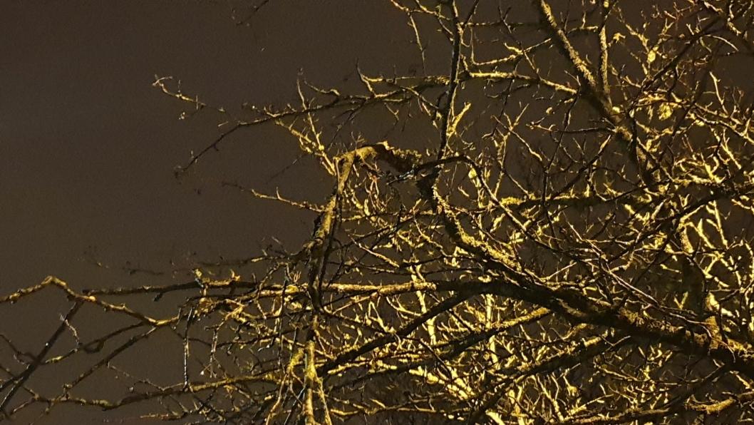 KNUSTE GRENER: Flere av grenene har blitt skadet av anleggsmaskinene.