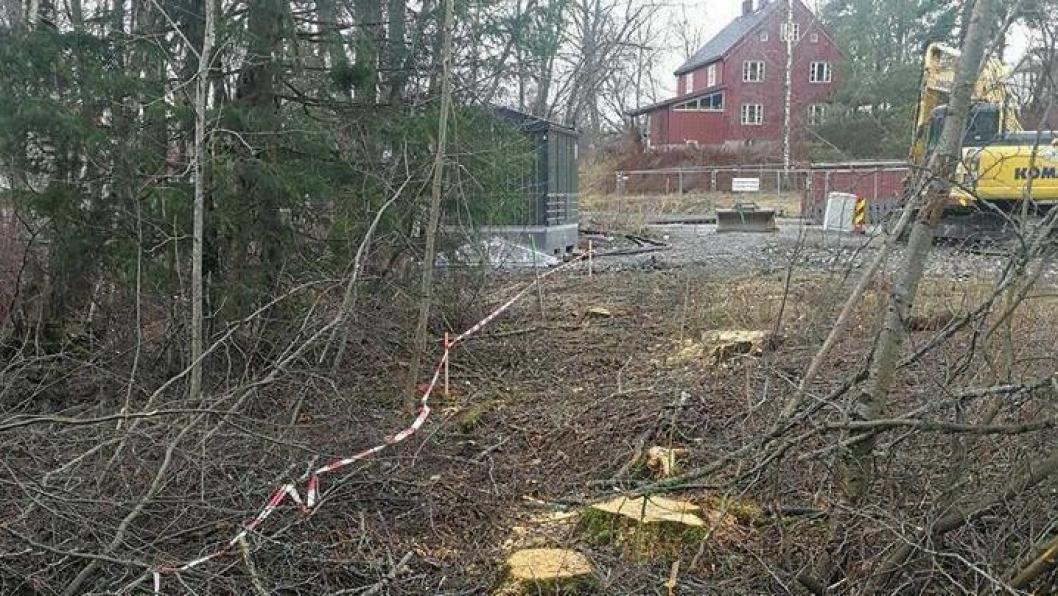 FELTE TRÆR OG ETABLERTE NY GANGVEI: Kommunen har gitt utbyggeren av Storebukta tillatelse til felling av trærne for å etablere en gangvei over det fremtidige nærområdet ved Storebukta.