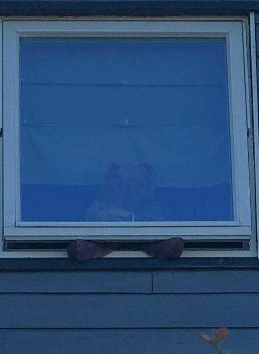 DEILIG MED VÅRLUFT: Bamse i Bjørnstjerne Bjørnsons vei 49 på Sofiemyr synes det er godt å stikke beina ut i vårluften.