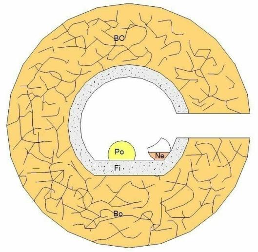 """FIGUR 2: Skjematisk tegning av det kunstige humlebolet etter at dronningen har flyttet inn. «Bo»: Bolmasse. «Fi»: Finmasse, f.eks. fettvatt, som bolkammeret er kledd med. «Po»: Pollenklump samlet inn av dronningen. «Ne»: Nektar som er lagret i en honningkrukke av voks produsert av dronningen. Figur: <span class=""""_5yl5"""">Atle Mjelde</span>"""
