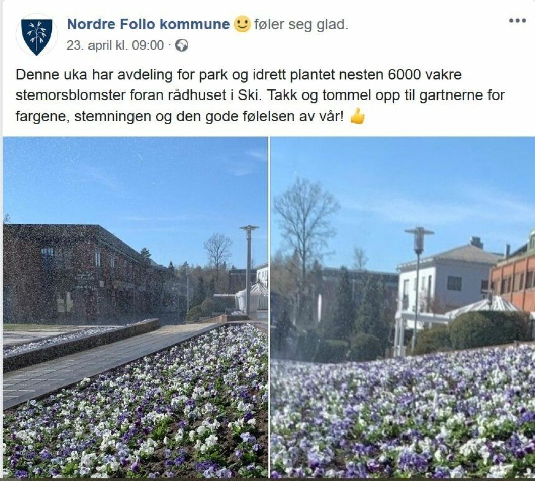 PLANTET 6000 BLOMSTER I SKI: Forrige uke ble 6000 stemorsblomster plantet foran rådhuset i Ski.