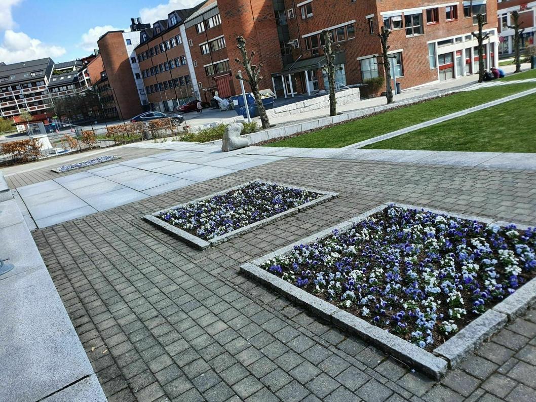 INGEN LEDIG PLASS: Kommunen har plantet stemorsblomster i store og små blomsterbed, men også i blomsterkasser og blomsterurner foran rådhuset i Ski.