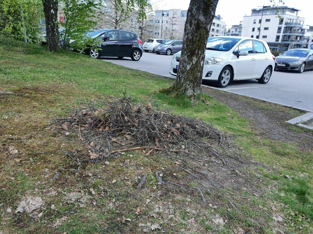 BLE IKKE RYDDET VEKK: Kvistene ble ikke fjernet, men i det minste ble de samlet inn i en haug.