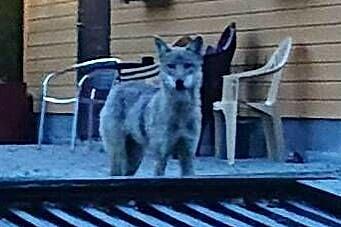 Fikk flere meldinger om ulv