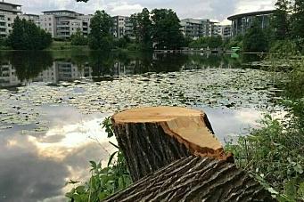 Utbyggeren fikk grønt lys til å hogge ned titalls trær i kantsonen