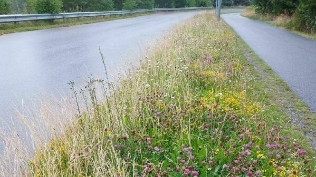 VILT OG VAKKER: I Norge i dag er blomsterenger og slåttemarker ute i landskapet imidlertid i ferd med å bli et sjeldent syn.