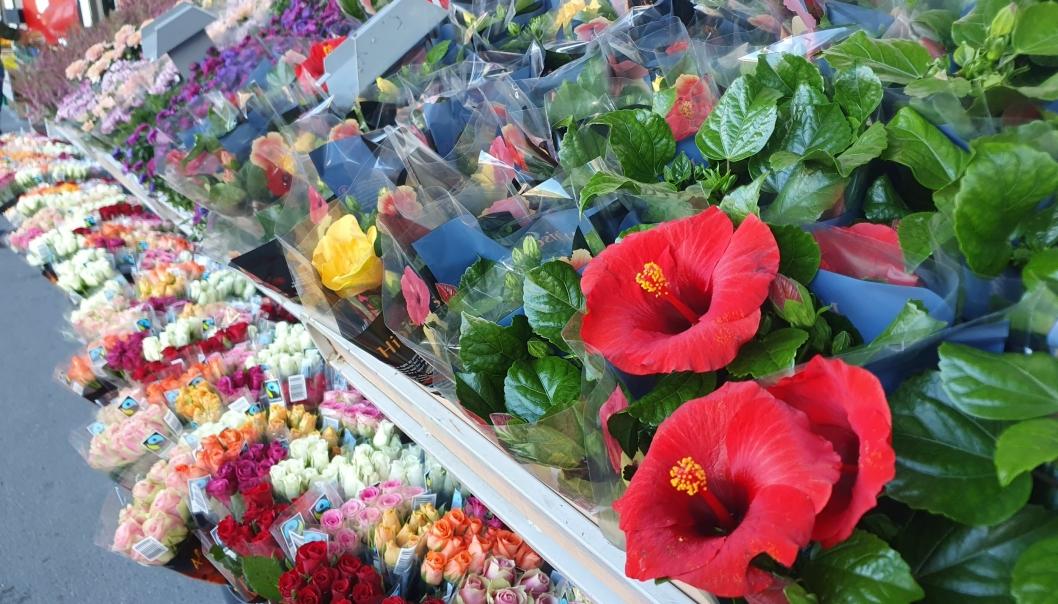 STORT UTVALG: Utvalget av blomster vil variere fra sesong til sesong. Foto: Yana Stubberudlien