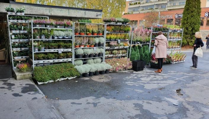STORT UTVALG: Butikken har et stort utvalg av blomster, både inne og ute.