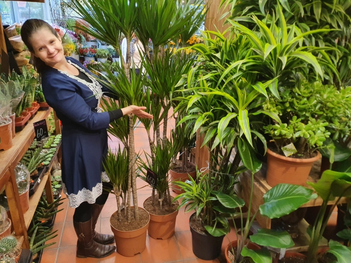 STORE OG SMÅ: Her finner du både store og små planter til enhver smak.