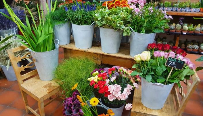 SNITTBLOMSTER SOM SELGES HVER FOR SEG: Du kan være kreativ og lage en bukett ved å blande ulike blomster.