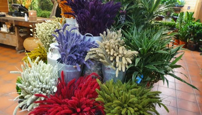FARGERIKT: Her kan du finne blomster i ulike farger og størrelser.