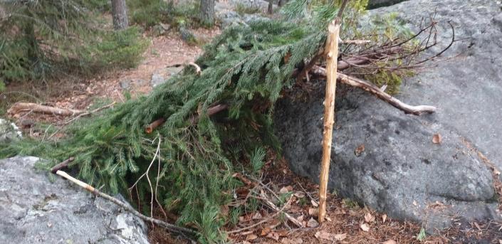 "ER DET SLIK VI VIL HA DET? ""Dette skal ingen barn lengre bygge i skogen... Er det slik vi vil ha det?"" lurer Jarle Halvorsen på."