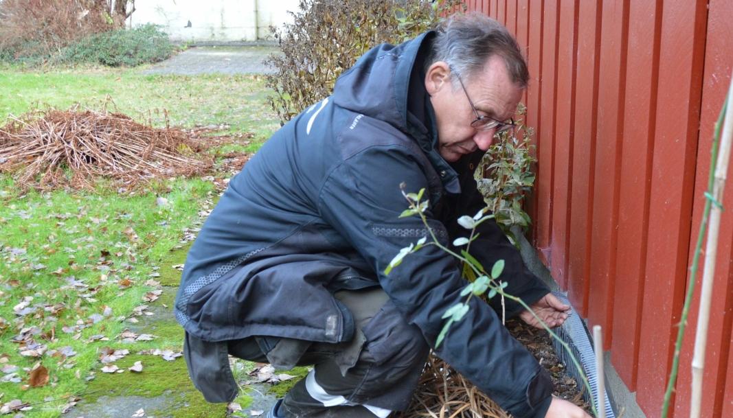 GODE TIPS: – Klipp rosebuskene, monter børster eller musebånd mellom kledning og mur, samt tett lufteluker med netting, anbefaler Svein Gunnar Antonsen i Alt-mann.